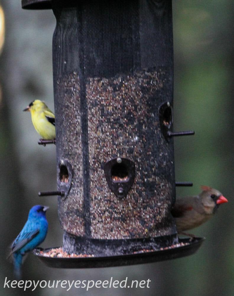 backyard feeders 3 (1 of 1)