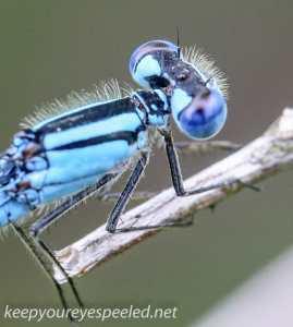 Macro hike dragonfly (1 of 1)