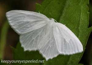 Macro moth 014 (1 of 1)