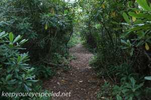 Bear Creek Preserve (8 of 39)