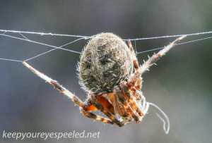 hike spider (1 of 1)