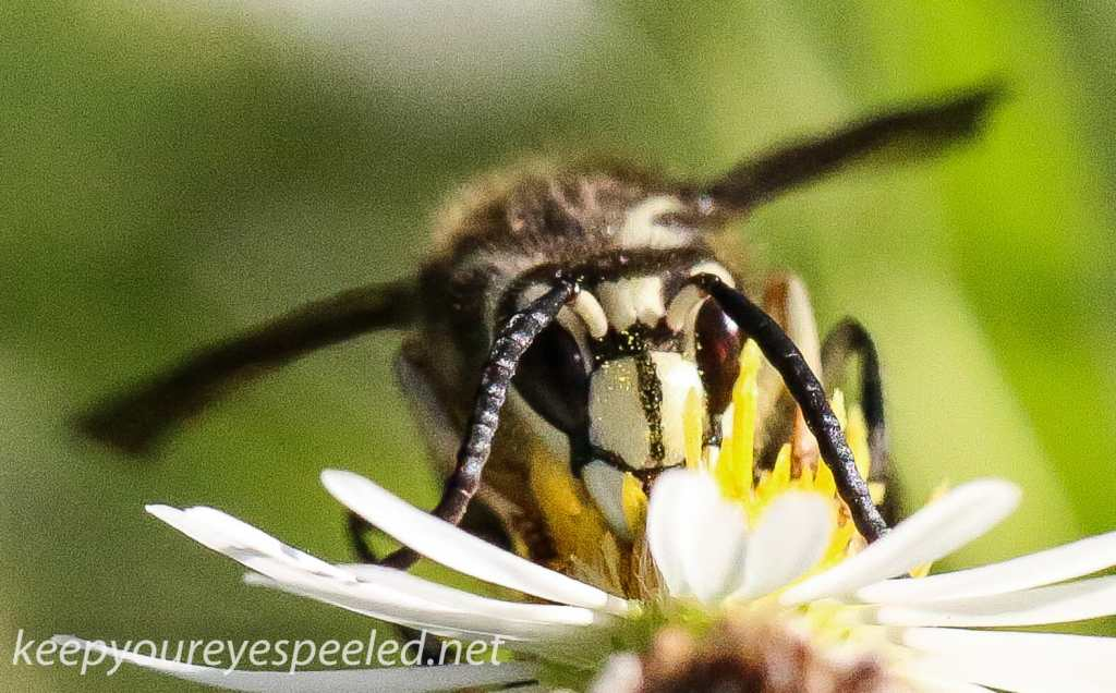 hike wasp- (1 of 1)