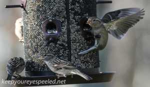 backyard feeder 178 (1 of 1)