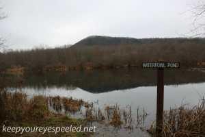 PPL Wetlands  (41 of 41)
