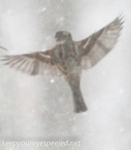 bird feeder sparrow (1 of 1)