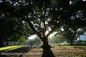 sydney moning walk Botanical Gardens-1