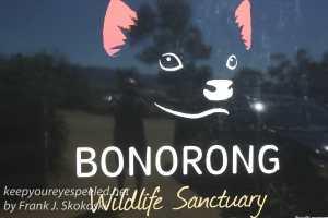 Bonorong -14