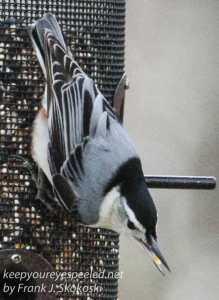 back yard birds-34
