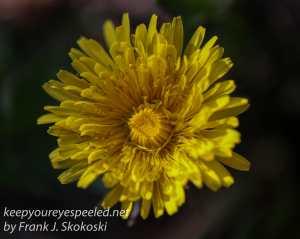 spring flowers  1-1