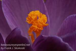 spring flowers -11