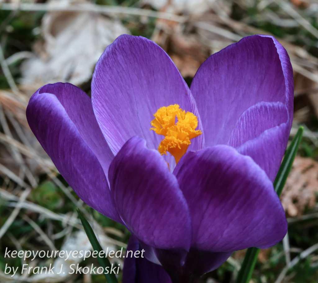 spring flowers -12