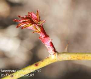 spring flowers -17