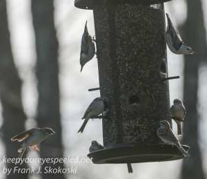 Backyard feeders -10