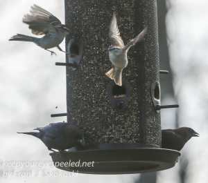 Backyard feeders -20