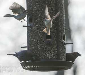 Backyard feeders -20