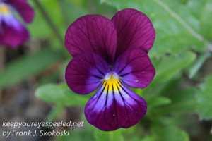 Macro flowers -18