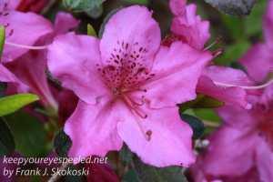 Macro flowers -31