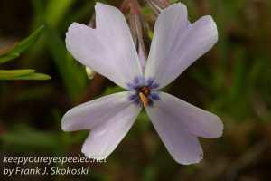 Macro flowers -33