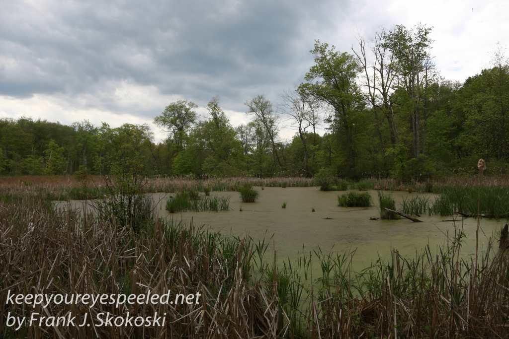 PPL Wetlands -11