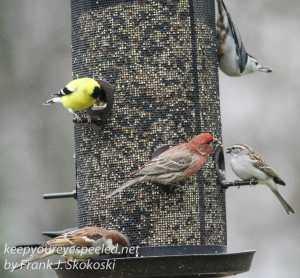 back yard feeders -22
