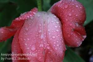 raindrops -13