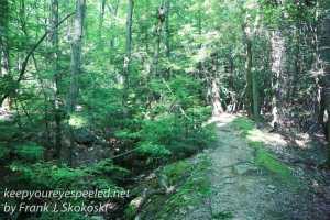 Weiser State Forest -17