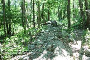 Weiser State Forest -51