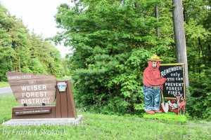 roaring creek hike -1