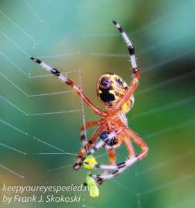 spiders-8