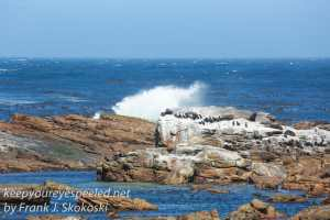 capetown-to-cape-of-good-hope-15