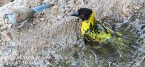 victoria-falls-safari-lodge-wildlife-8