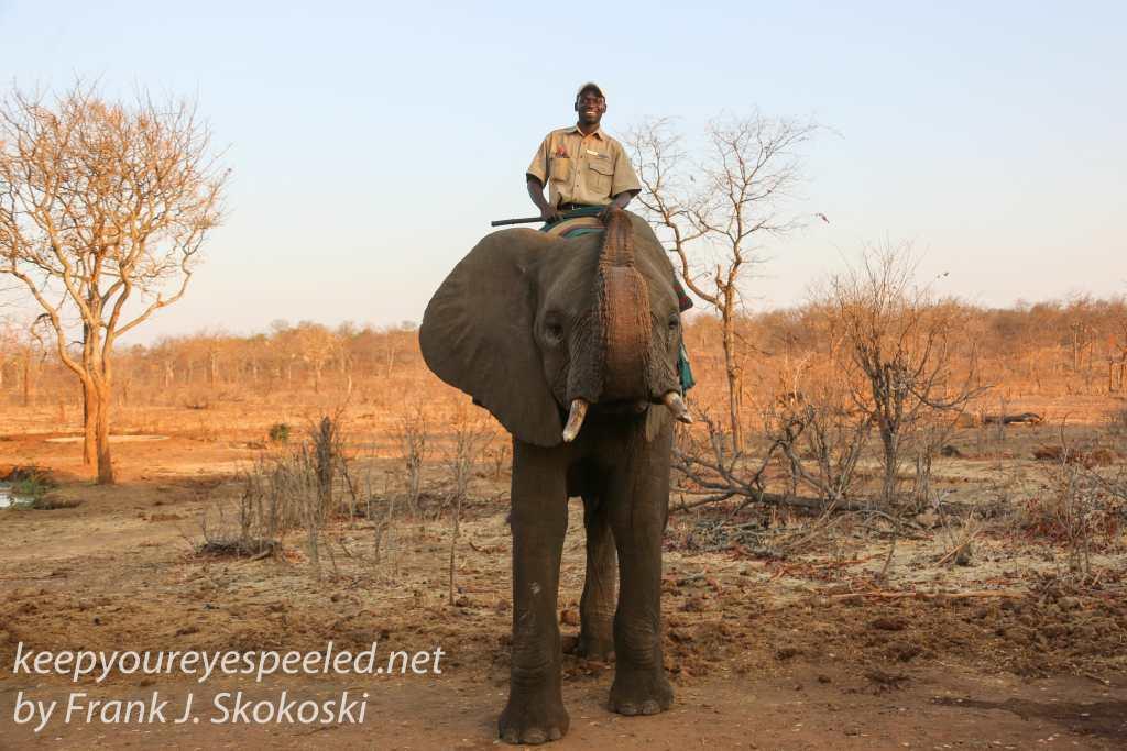 zimbabwe-elephant-ride-28