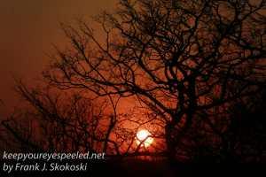 zimbabwe-elephant-ride-sunset-7