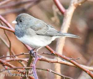 ppl-wetlands-birds-10