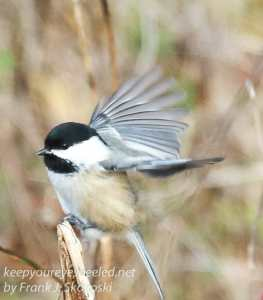 ppl-wetlands-birds-4
