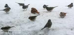 birds -10