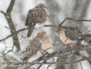 birds-28