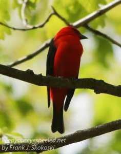 Rails to trails birds -11