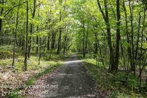 Rails to trails birds -2-2