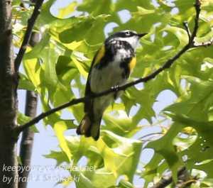 Rails to trails birds -2
