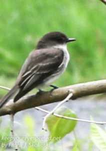 birds PPL Wetlands -17