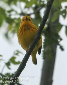 birds PPL Wetlands -23