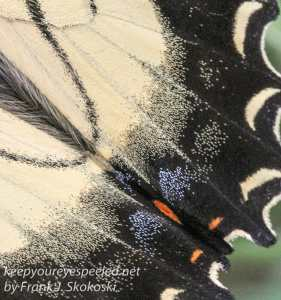 close up of butterfly wing
