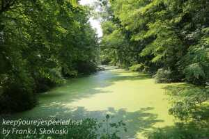 dark green duck weed covered pond in wetlands