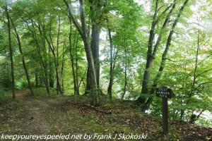 trees along Susquehanna river