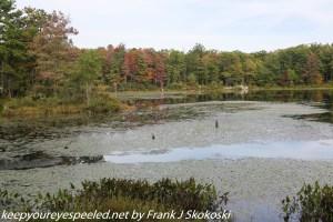 trees showing fall colors along lake
