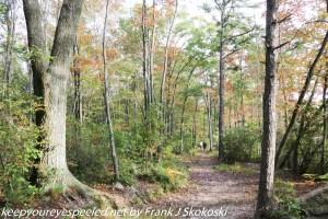 tree lined path along lake
