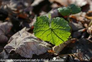 sunlit green plant growth