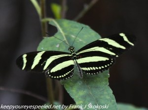 striped butterfly on leaf