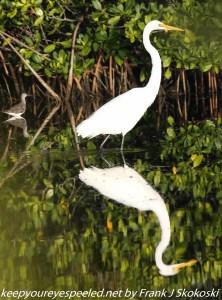 wading birds in pond